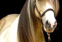 Horses / by Rocio Coello Alcantara