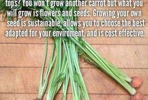 Garden: Grow Food / by Soraya Deborggraeve