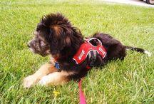 Service Dogs / Information on Service Dogs
