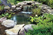 Frog ponds