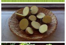 evde  sebze yetiştiriciliği