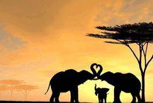 Elephants / Elephant are my favourite animals