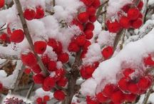 Plants with Winter Interest