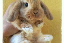 Lovable Cute Animals