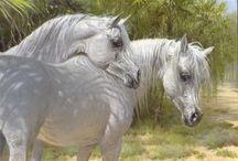 Horses / Amazind