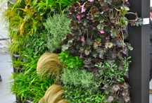 muur met planten