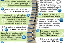 chiroprakticke fakta