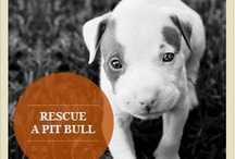 For the Love of a Pit Bull!!!! / by 💞 Jami Myatt 💞