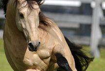 Horses / Amazing horses