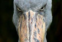 怖い顔の鳥