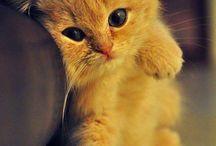 Cute Animals / Animals that make you go 'awwww'