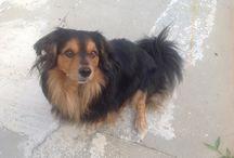 Jack - il Roman Terrier