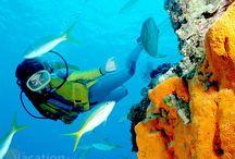 Scuba Diving / Scuba Diving