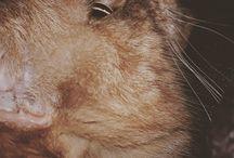Einar cica, cat (Ejni♡)