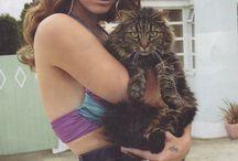 catscatscats. / by Kate Bauman