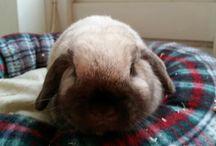 bunny's❤