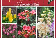 A hummingbird and butterfly garden