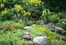Plant palette for Black Residence: Rock Garden