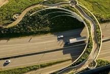 bridge for animals