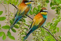 Fauna & Flora