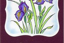 Nature/ Flowers I-P