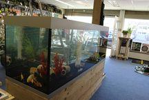 Aquariumprojecten / Wesdijk plaatst aquariums bij particuliere, bedrijven en instellingen. Op dit bord een impressie...