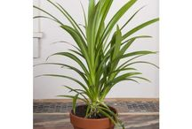 Logee's Foliage Plants / Foliage plants that hold their own! No flowers needed.