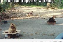 Gatti...ovunque!