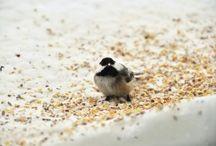 Bird Programs