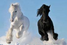 Horses / Horses :)