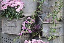 Flowers! / Passioni floreali