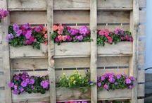 fiori in verticale