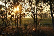 Čas dozrel. Jeseň hrá všetkými farbami. / Pre mňa je toto ročné obdobie symbolom plnosti času, keď v povetrí cítiť hlinu, zmiešanú s dymom zo záhrad a arómou hrozna.., počuť piskot škorcov,sledovať ranné hmly a chlad neodbytne ohlášajúci blízkosť zimy.