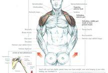 Treino para o ombro / Nossos ombros são constituídos por diversos grupos musculares (Supra espinhal), Infra espinhal, Redondo Menor, Redondo Maior, Subescapular, mas neste caso, vamos focar nos Músculos Deltoides, mas lembrando que em alguns exercícios, diversos músculos estão em ação.