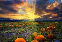 Pumpkin Patches / It's time to check out all of the pumpkin patches and await the arrival of The Great Pumpkin