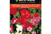 Semillas de flores / Las flores más bonitas para el jardín