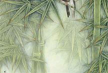 Bamboo _ Bambus