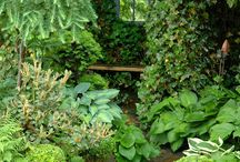Green garden 緑色庭