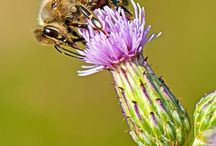 Bienen / Hummeln / #Bienen