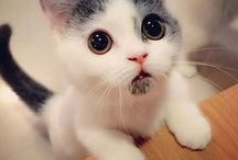 Sweet Cat❤️ / I Love cat