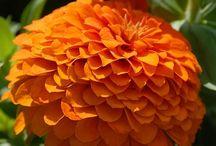 Z -- Flowers