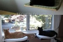 Cool Pet Home Ideas / by Arm The Animals Clothing