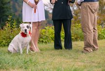 Weddings with Dogs / Incorporating dogs into your wedding!