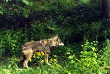 Susi Wolf. My photography