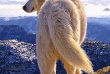 Native American Indian Animals & Birds / Native American Indian Animals, Pets, Birds, Eagles, Wolves, Dogs, Cats, Horses, Rez Animals, Etc.