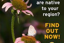 NWF (National Wildlife Federation)