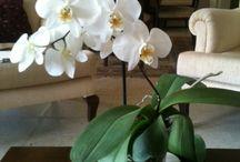 Orkidelerim