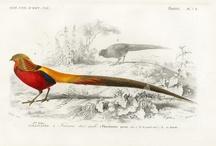 Bird prints / Vintage bird prints