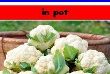 Grow Cauliflowers in Containers
