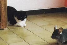 Gif gatos